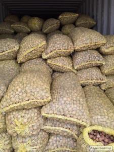 Продаю грецкий орех на экспорт