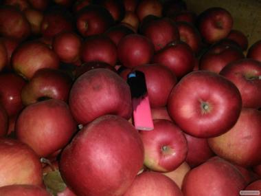 Продам яблоки из холодильника