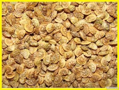Семена Эспарцета от 1 кг