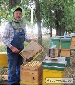 - Продам Бджолосім'ї