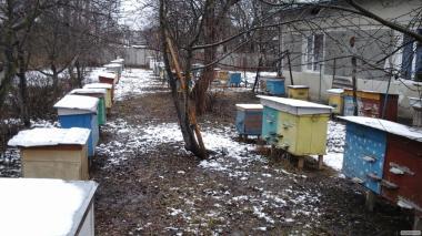 Продам 150 пчелопакетов