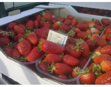Продам ягоду полуниці