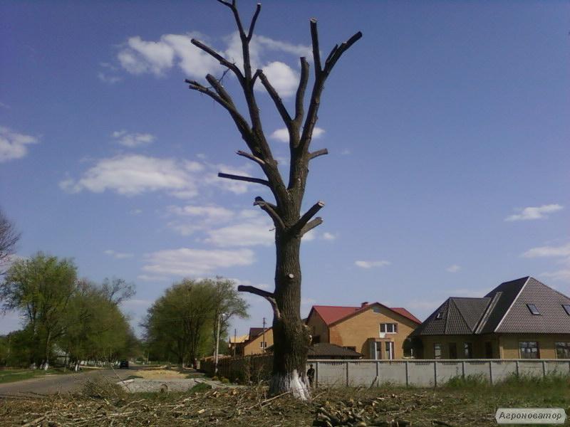 спилим дерево,обрезка сада,покос травы