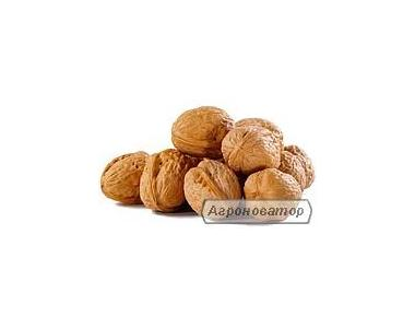 продам орех грецкий 2015г