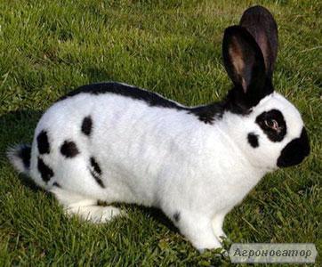 Продам мясо молодого кролика, органический продукт, домашнее хозяйство