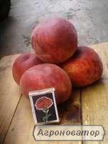 продам персик харбингер
