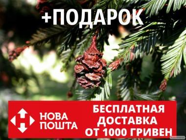 Секвойя семена 20 шт (вечнозелёная, красная, Sequoia sempervirens)