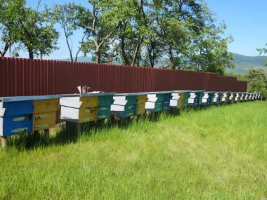 Продам пчеломатки