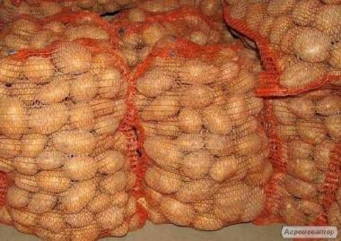Заключим договор на поставку картофеля и картофельных продуктов