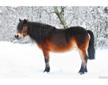 кобила поні Уля