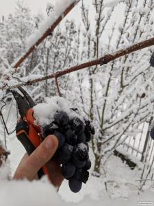 Закарпатские домашние вина