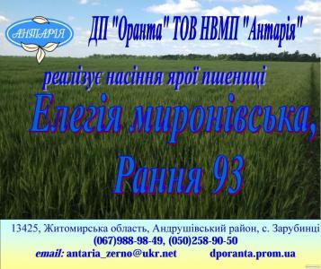 Насіння ярої пшениці Елегія Миронівська (еліта, СН-1), Рання 93(еліта,
