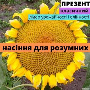 Семена подсолнечника Фурор