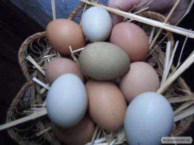 Инкубационные пасхальные яйца