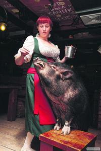 """Комбикорм """"Коньяк с орехом""""- Для свиней, которых кормят как человека"""