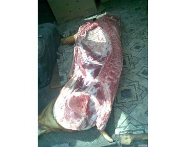 свинина свиноматки в полутушах охложденка дешево
