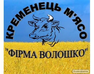 Мясо говядины, экспорт