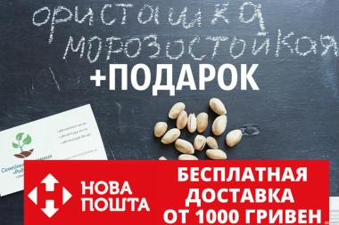 Семена фисташки (10 штук) орехи Pistácia véra для сеянцев и саженцев