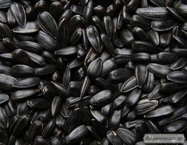 Продам насіння кондитерську