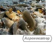 Живая рыба оптом