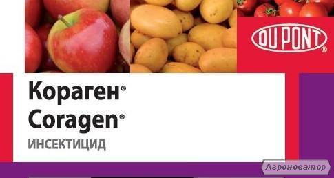 Кораген