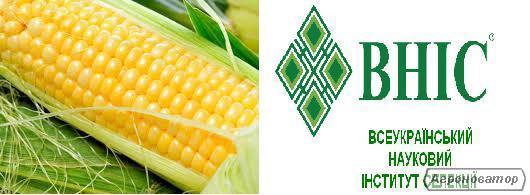 Насіння кукурудзи, гибрид МВ 277 ТC