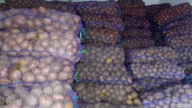Продам картоплю оптом