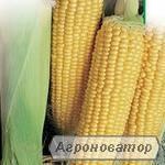 Продажа кукурузи