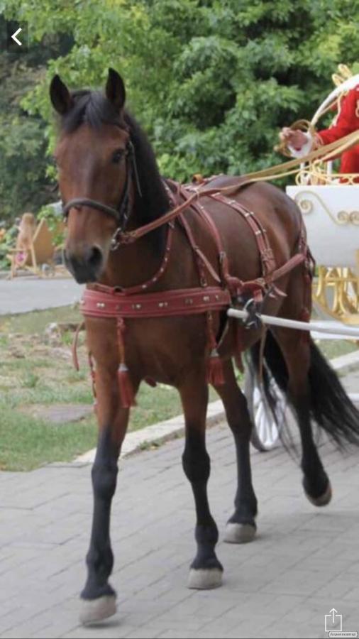 Кожаная упряжь на коня супер качество