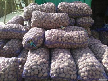 Посівний насіннєву картоплю, велику картоплю