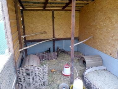 Продам фазанів мисливських