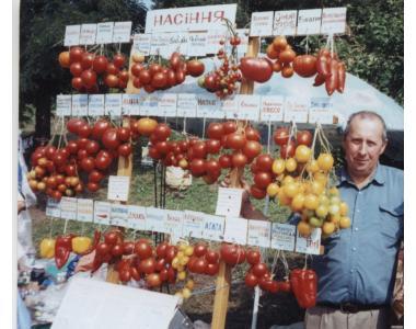 Рассада разных сортов помидоров, капусты, перца. ..