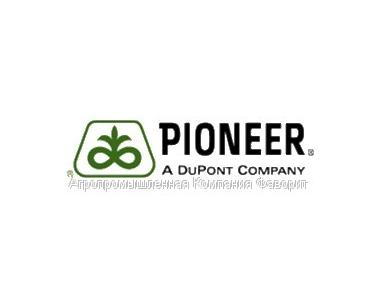 Гібриди кукурудзи компанії «ПІОНЕР» (PIONEER)
