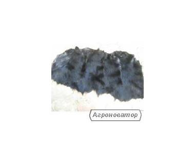 Продам шкуры нутрий разные цвета
