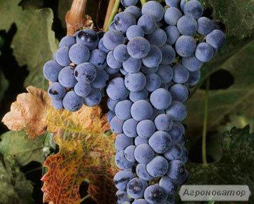 Натуральні українські вина (ОДЕСЬКИЙ ЧОРНИЙ, МЕРЛО) Домашнее вино