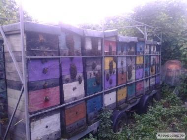 пчелопавильон ульи