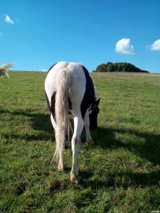 Продам двух лошадей