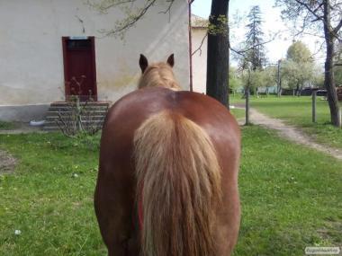 продам хорошого коня