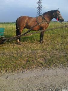 Продається робоча кобила
