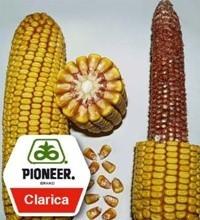 Насіння кукурудзи Кларика