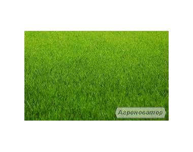 Продам насіння газонної трави. (газонна суміш)-спорт.,універсал.,тінь.