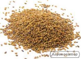 Семена Люцерны немагниченой, желтой. Оптом и в розницу.