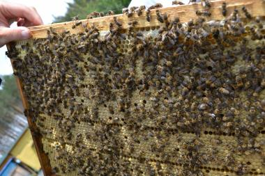 Продаются пчелы