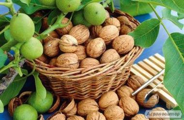 Продам грецкий орех сухой в сетках хорошого качества
