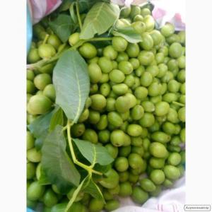Зелений горіх воскової стиглості.