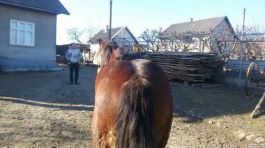 рабочие конь