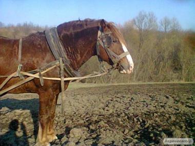 Продам коня. Кінь.