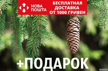 Ель европейская семена (50 шт) (ель обыкновенная, смерека,Pícea ábies)