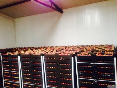 Продам польские яблоки по цене производителя, оптом