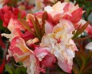 Розсада квітів і трав